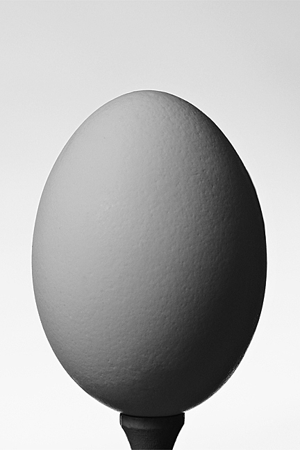 Portrait of an Egg